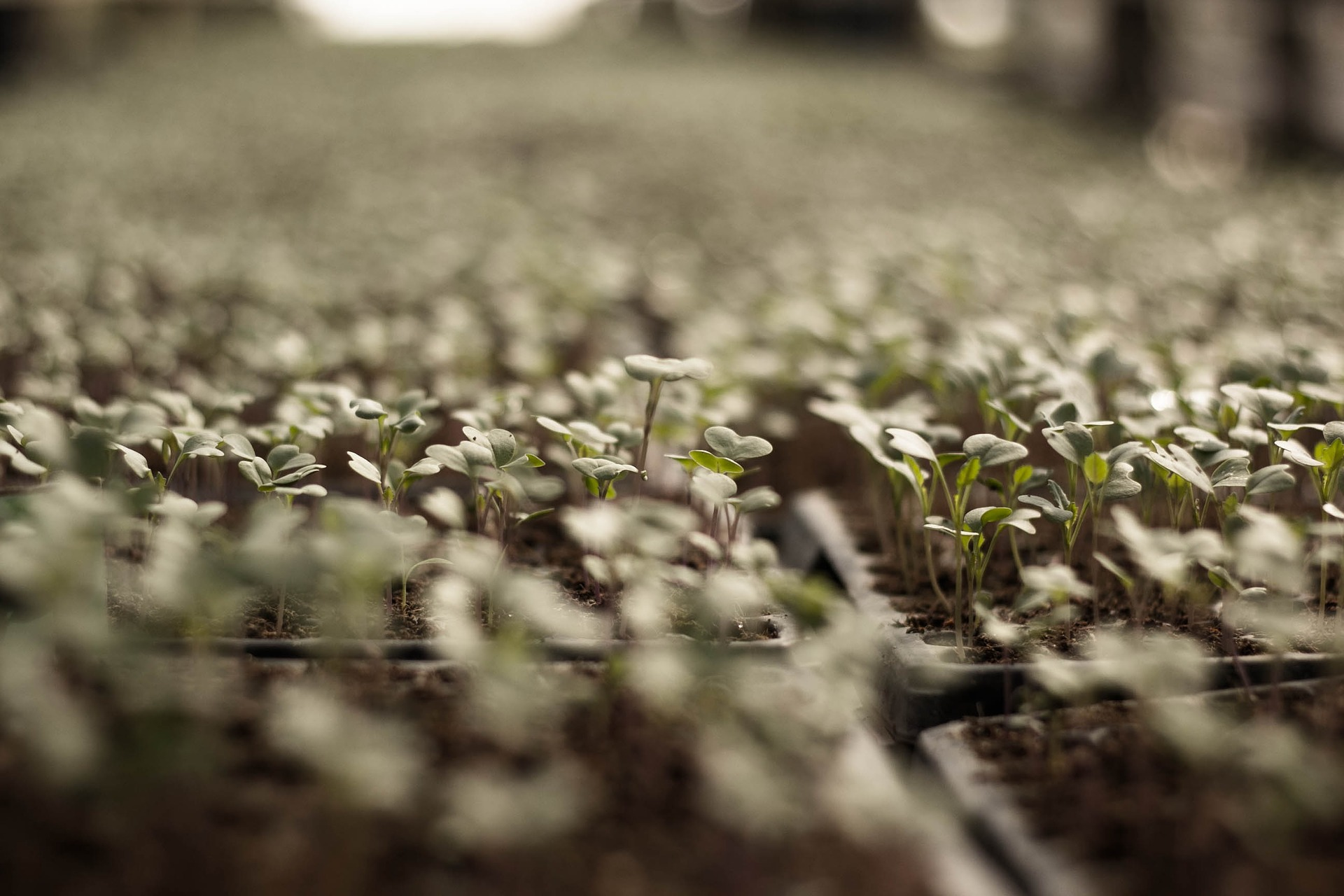 Gemüse anbauen - Keimlinge