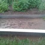 Erinnert mehr an ein Moorbad: das Salatbeet im Versuchsgarten