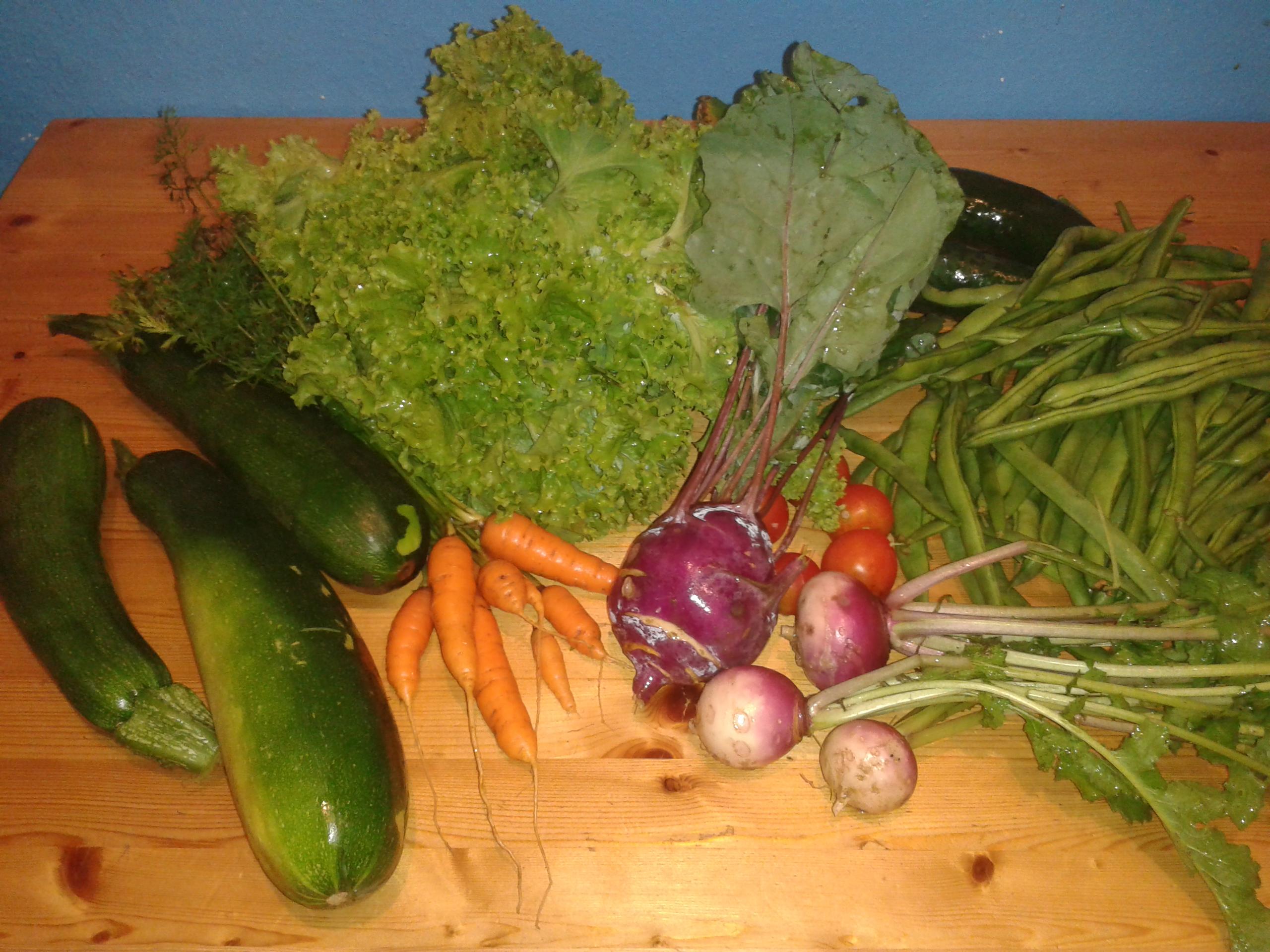 Die Ernte fürs Wochenende: Karotten, Zucchini, Kohlrabi, Mairübchen, Gurken, Bohnen, Salat und Tomaten