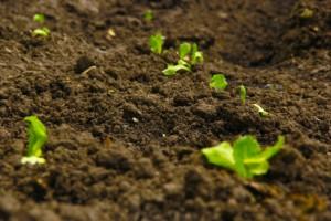 Die richtige Bio-Erde für Hobby Gärtner
