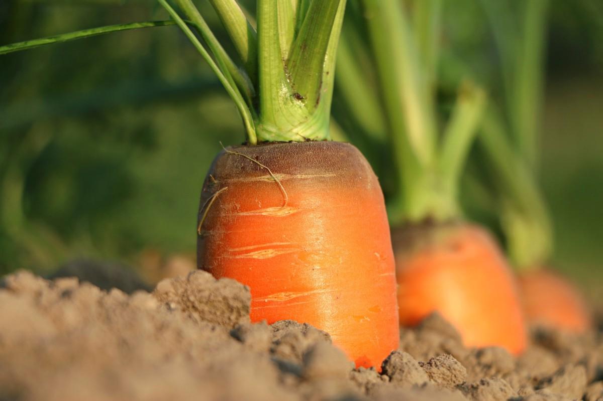 In unseren Bio Saatgutboxen stecken nicht nur Samen für Möhren