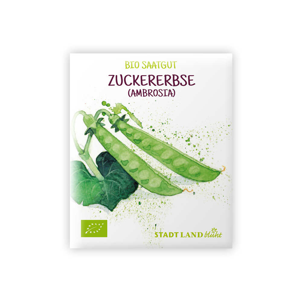Bio Saatgut Zuckererbse (Zuckerschote).