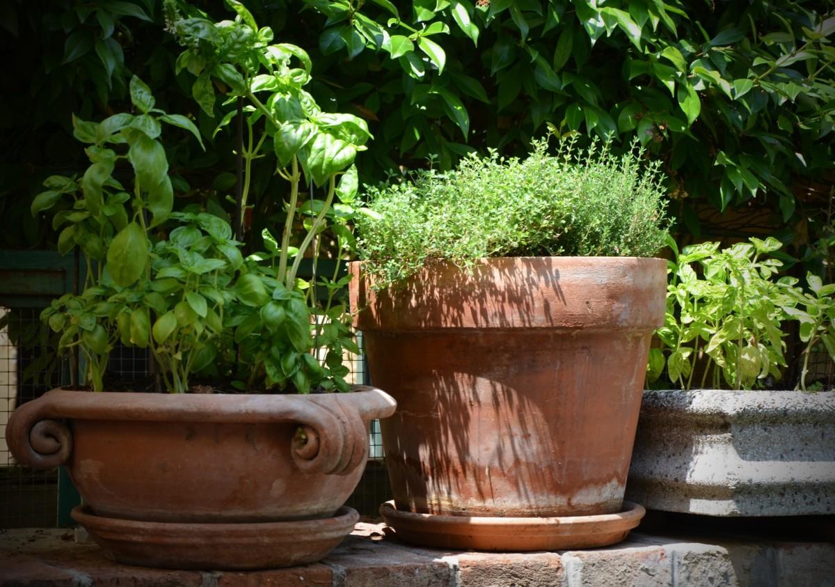 Kräutergarten anlegen Tipps für den besten Standort