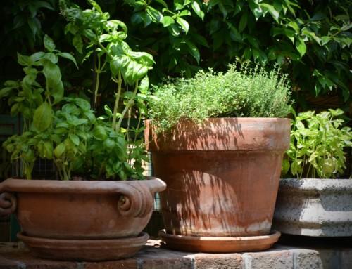 Einen Kräutergarten anlegen – 4 Tipps zum Standort