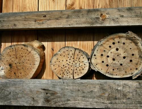 Insektenhotel bauen – Teil 3 der Serie zum bienenfreundlichen Balkon