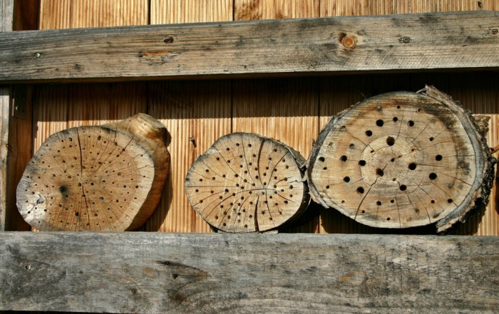 Insektenhotel bauen aus Holzscheiben als Nisthlfe für Wildbienen