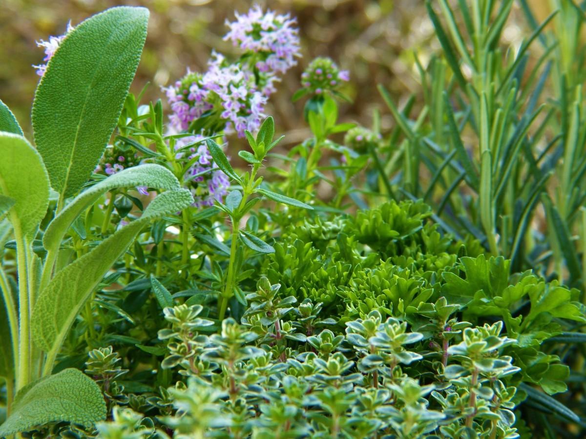 Ein bunter Kräutergarten. So könnt ihr Kräuter säen und den Kräutergarten pflegen.