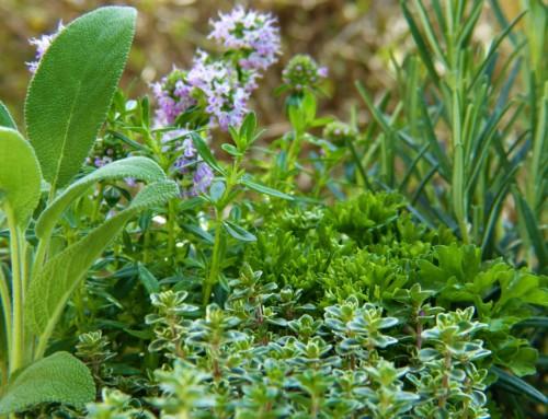 Der Kräutergarten – 3 Tipps für das erfolgreiche Anbauen von Kräutern