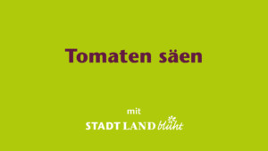 Tomaten anbauen - Aussaat und Vorziehen