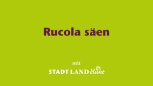 Rucola anbauen - die Aussaat