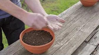 Salat anbauen Salat säen
