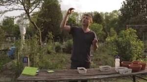 Stangenbohnen anbauen. Die Aussaat.