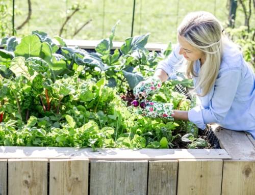 10 Tipps zum Gemüsebeet anlegen von der GartenFlora (Gastbeitrag)