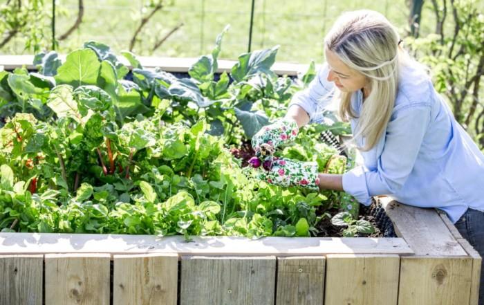 Planung Gemüsebeet